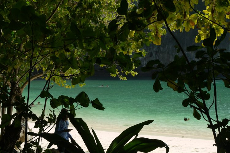 a sandy beach seen through tropical vegetation