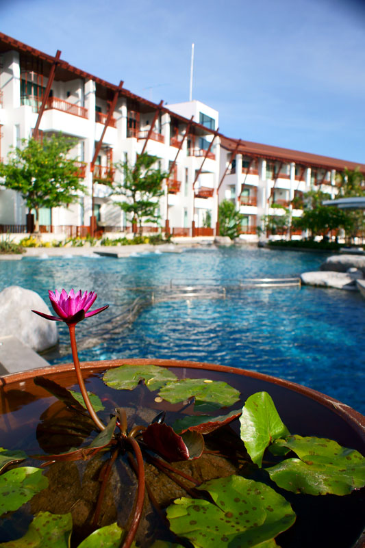 Photo of lotus plants pool side at luxury resort